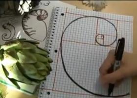 Забавна математика – Рисуване по математика: Спирали, Фибоначи и Растения
